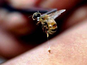 blog-2-bee-stinger-escondido-pest-control