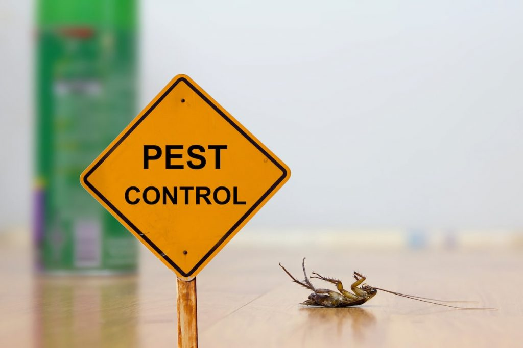 blog-4-Pest Control – 3 Things you Might be Trying that WON'T Work
